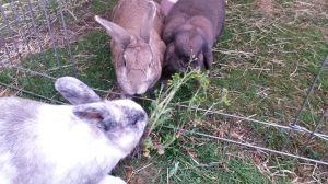 Daisy, Hazel & George