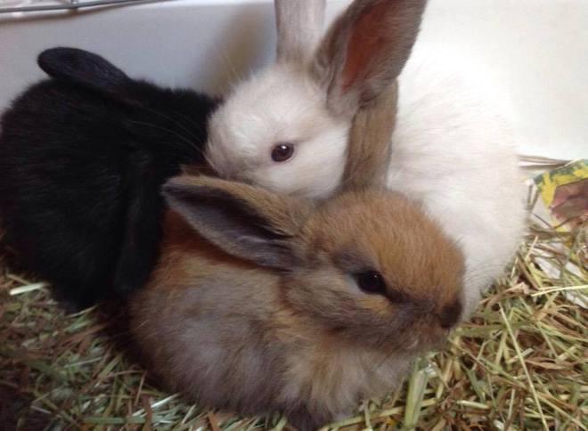 baby bunnies 2
